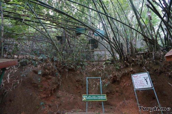 Центр реабилитации гиббонов у водопада Банг Пз