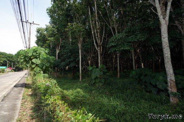 Дорога к водопаду Ton Sai