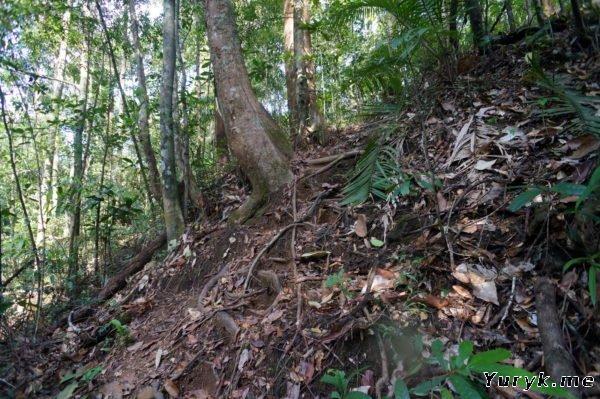 Подъем в джунгли у третьего каскада водопада.