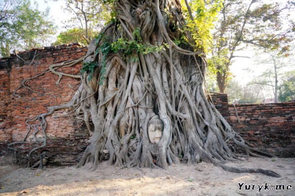 Wat Mahathat - голова Будды